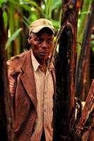 African elderie Village man working in the Banana field around his home in Marangu, Tanzania