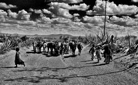 BW Photo of Masai kids clearing the path to a cattle herd in Tanzania