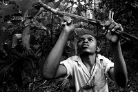 Black & White Portrait photo Zanzibar Young man carving a Cinnamon tree branch for sale
